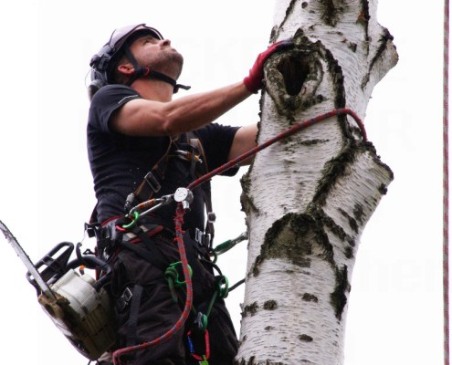 Meik Skoda2 - Baumpflege Astrein