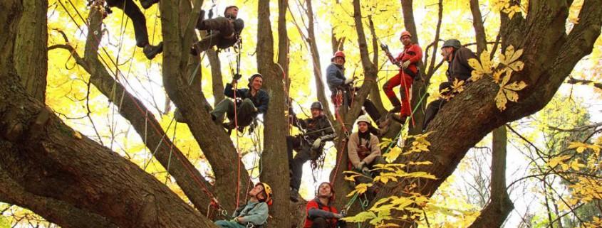 Baumpflegeteam Berlin