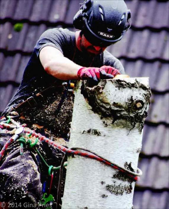 Baumpflege kosten - Galeriebild13
