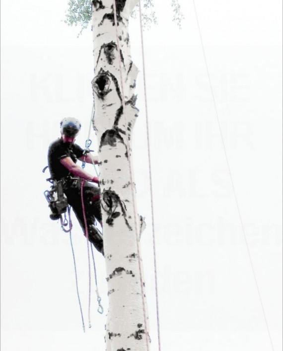 Seilzugangstechnik – Baumpflege Astrein