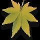 Baumpflege Astrein - Baum fällen im Zeitraffer