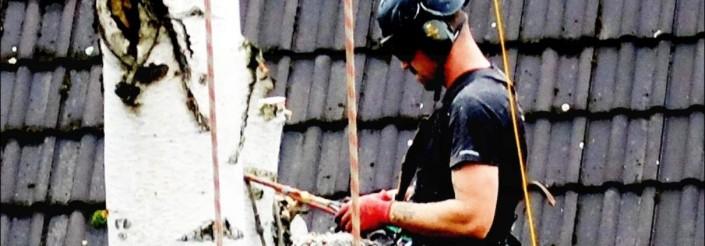Startseite-Slide4 Baumpflege Astrein - Baumfällung, Baumschnitt Baumarbeiten