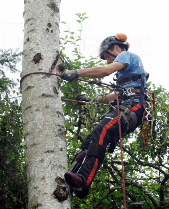 Seilzugangstechnik Berlin – Baumpflege Astrein