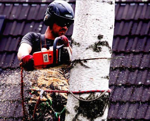 Baumpflege in Berlin - Baumpflege Astrein