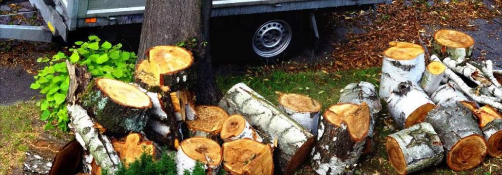 Baumpflege Astrein - Baumfällung, Baumschnitt Baumarbeiten Berlin