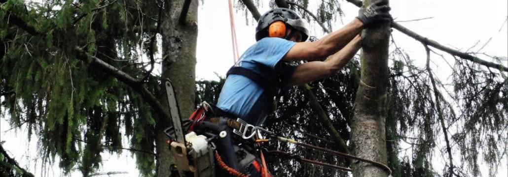 Startseite-Slide5 - Baumfällung, Baum schneiden, Baumarbeiten